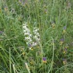 Lauku sētas biotops #5.