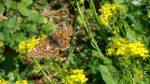Lauku sētas biotops #15.