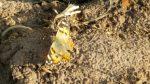 Lauku sētas biotops #16.